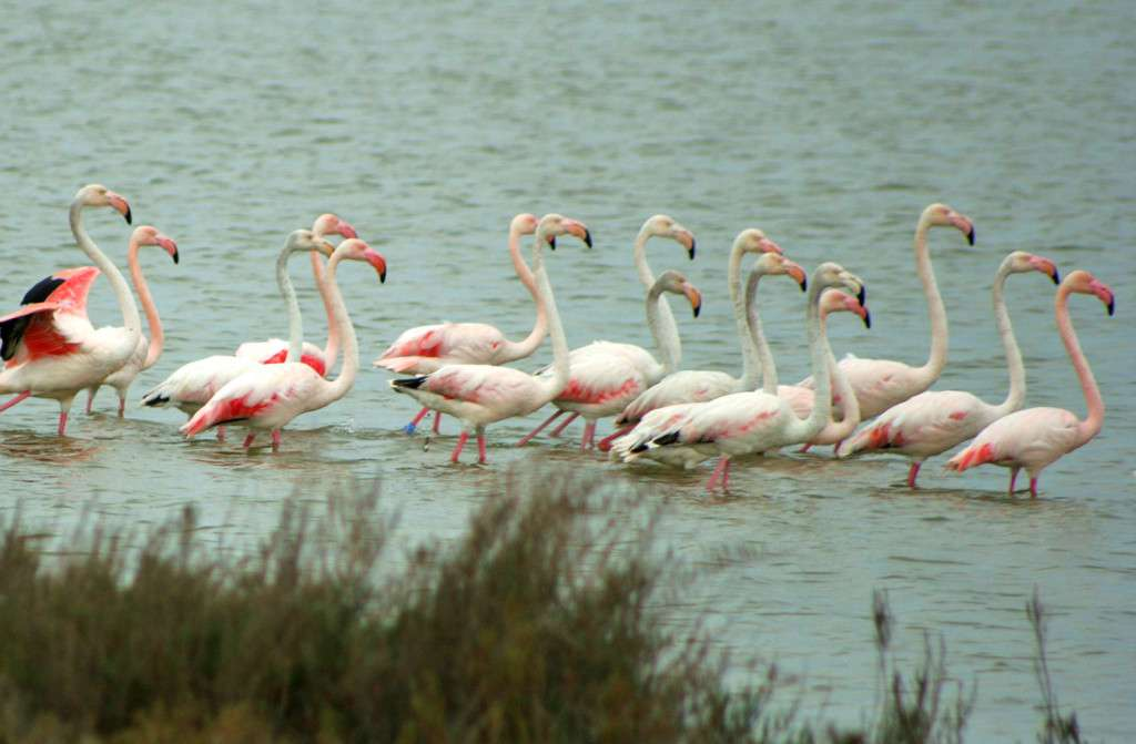 Vendicari Nature reserve is one of the best preserve wet areas of Sicily. visitors can easily admire: flamingos, royal swans, herons, seagulls, cormorans..